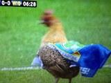 Ewood Chicken
