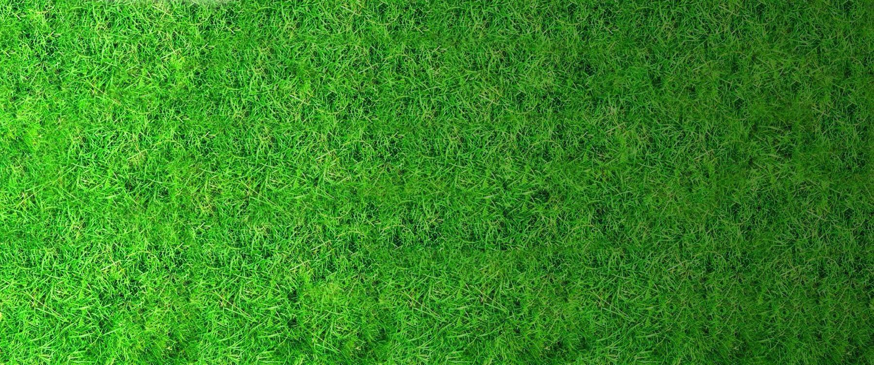 full background grass