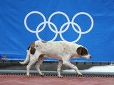 A stray dog walks by the Olympics logo in Sochi, Russia.