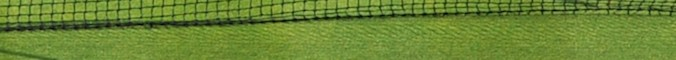 Wimbledon section header